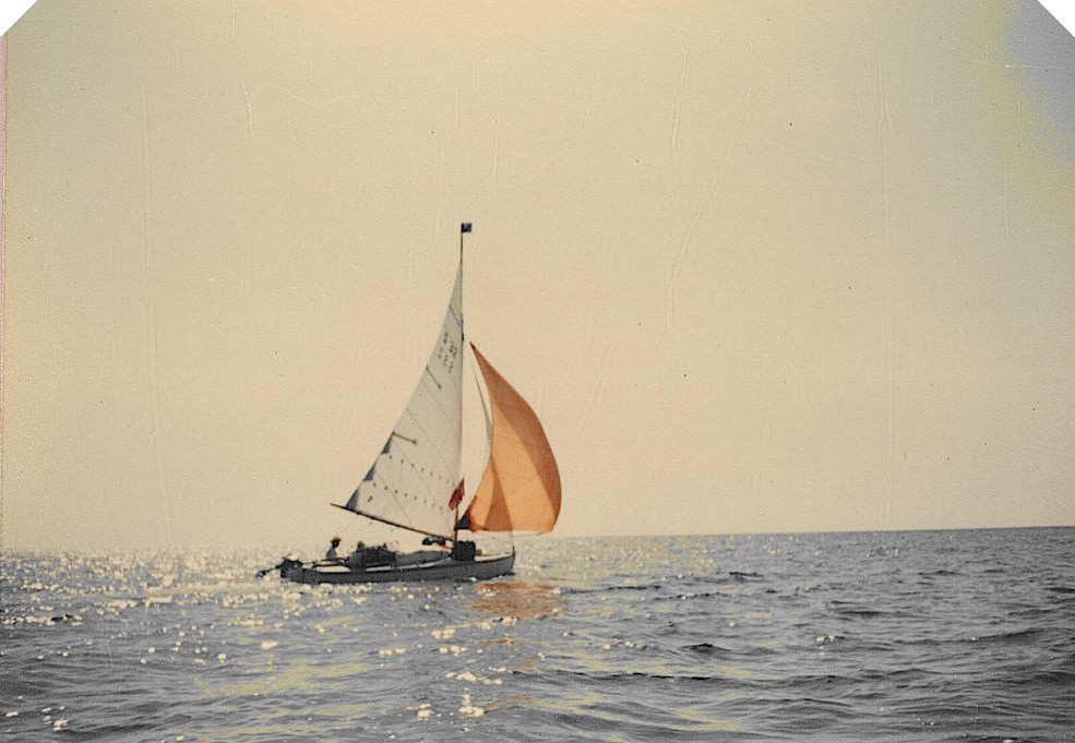 Seabird Sailing with Spinnaker