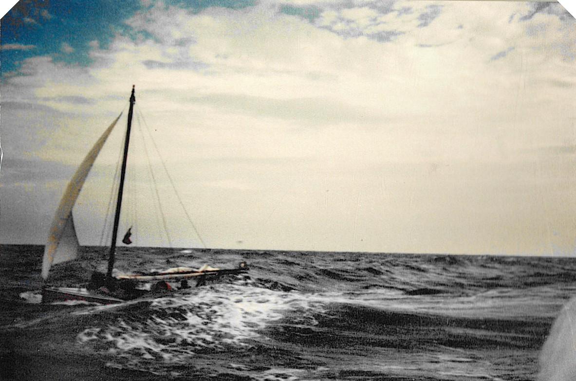 Seabird in Shamal Storm